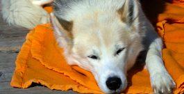 Existe-t-il des conditions spécifiques afin que son chien soit assuré ?