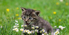 Pourquoi souscrire à une assurance santé pour chat